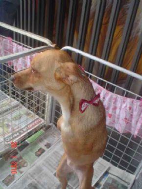 A cadelinha  Lili, sem as duas patas dianteiras, encontrou um dono na última feira  organizada pela ONG
