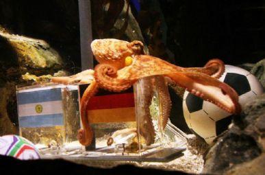 Polvo chamado  Paul acertou todos os resultados da seleção alemã na Copa do Mundo