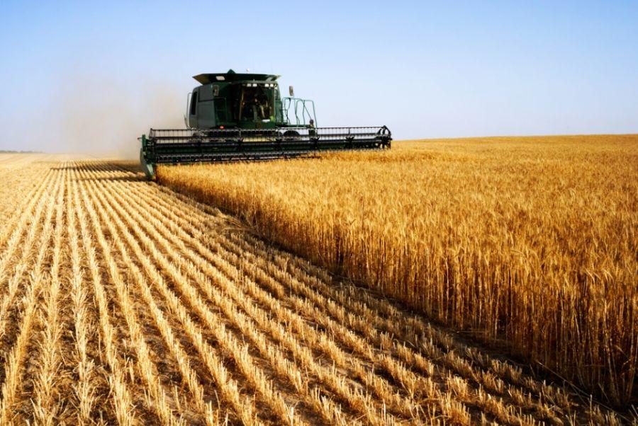 Produção brasileira de grãos deve chegar a 290 milhões de toneladas na safra 2021/2022