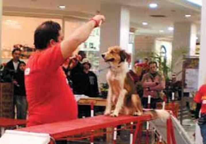 Esporte como o agility será oferecido para os cachorros / Jaqueline Chemale / Divulgação