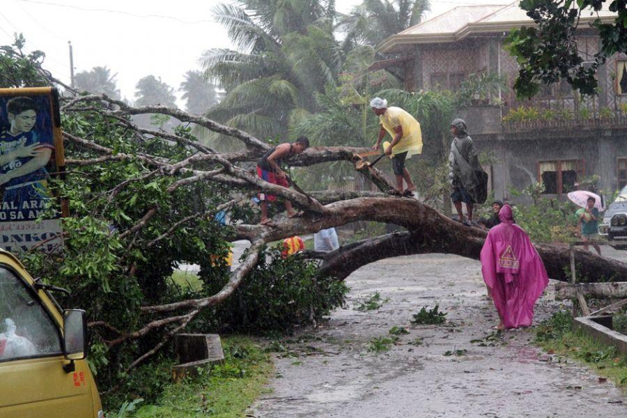Trabalhadores retiraram uma árvore que caiu, após o tufão Bopha / AFP Photo