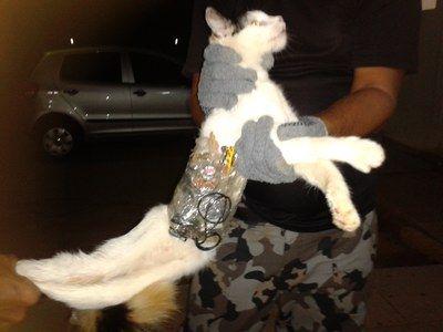 O material que o animal carregava foi apreendido / sgap.al.gov.br/Divulgação