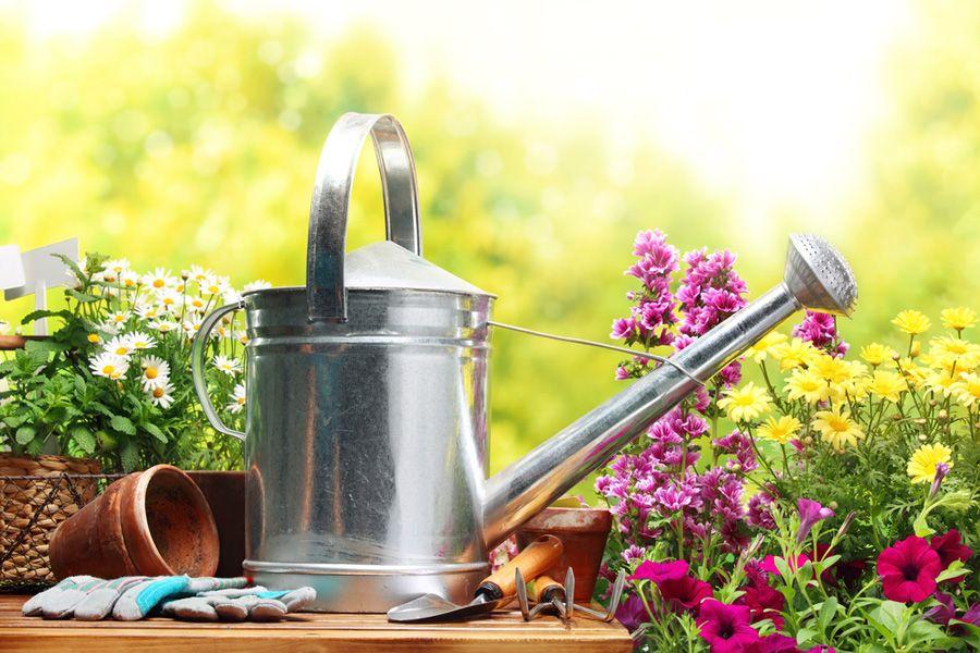Especialista ensina como cuidar do jardim no verão