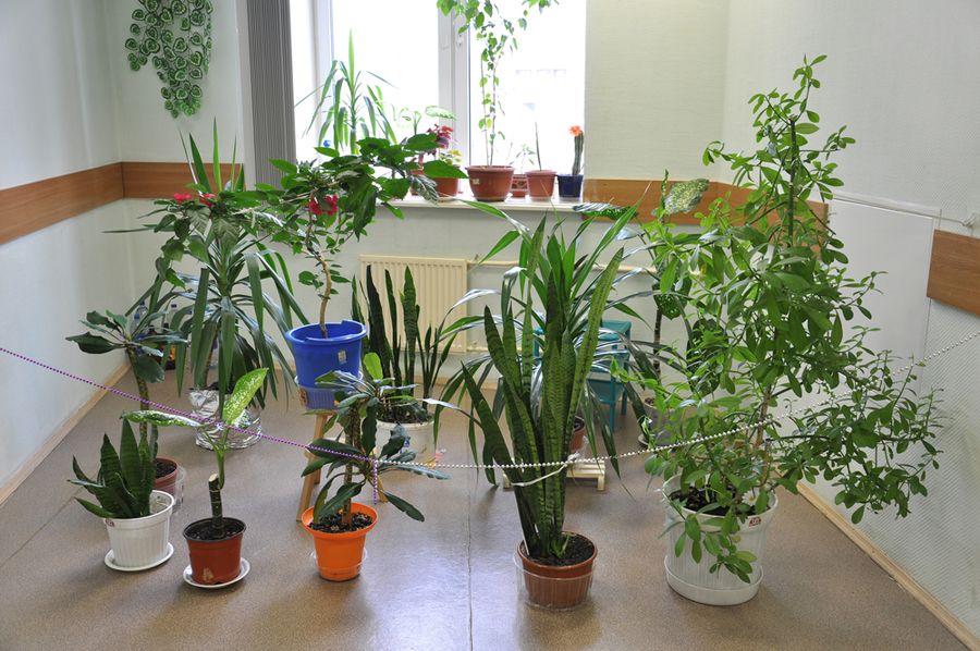 Saiba como cuidar das plantas durante a viagem