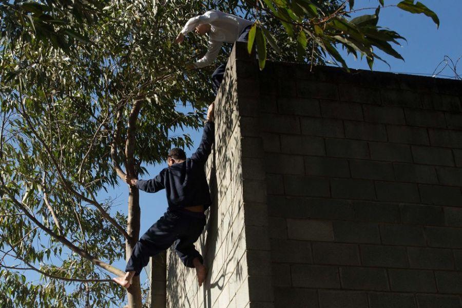 Internos usam a árvore para fugir da Fundação Casa