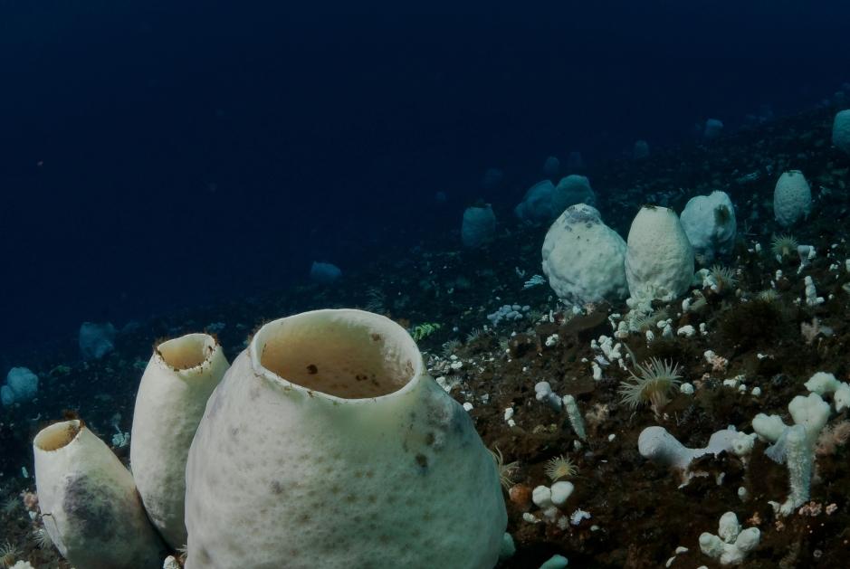 A beleza marinha e o que ela reserva