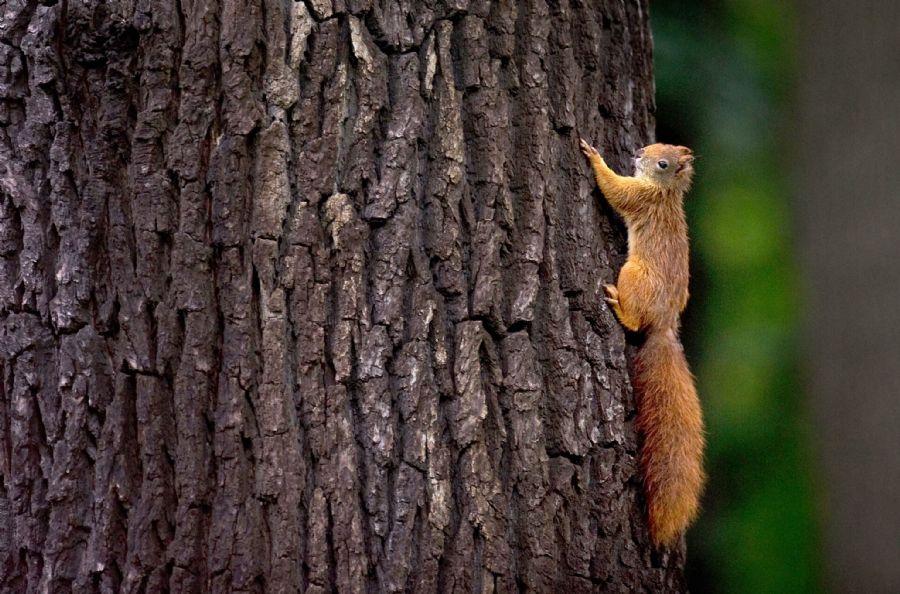 Esquilo deixou uma bagunça no local / Arno Burgi/AFP/Arquivo