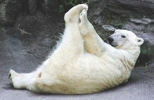 Urso polar morre de tristeza