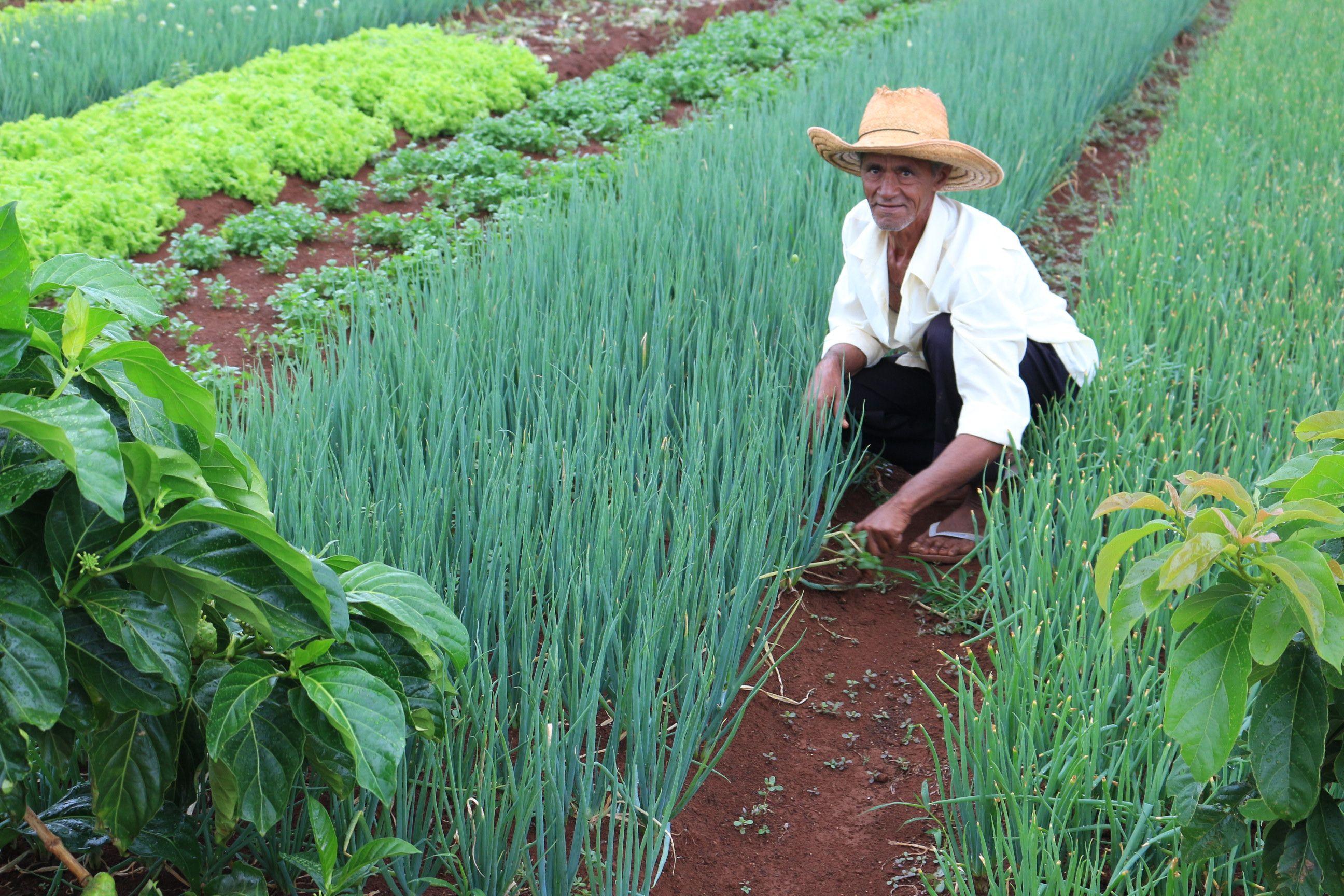 Presidente da Embrapa aborda futuro da agricultura sustentável brasileira