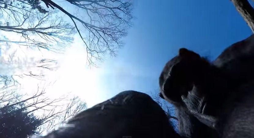Chimpanzé derruba drone e fica observando o objeto / Reprodução/YouTube