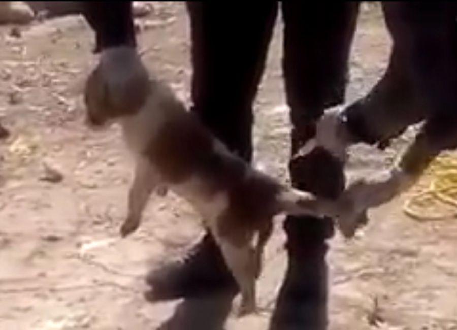 Homem mata cachorro, no Irã, injetando ácido / Reprodução/YouTube