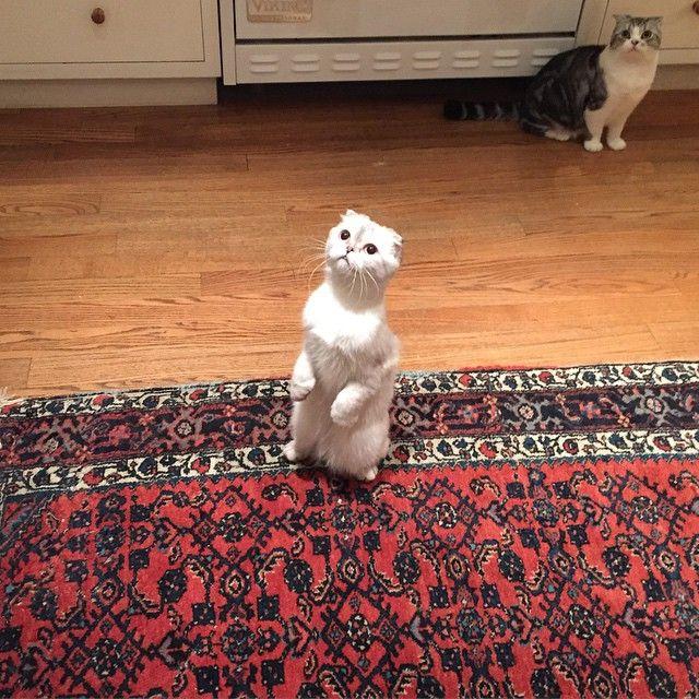 Calvin Harris posta foto dos gatinhos de Taylor / Divulgação/Instagram