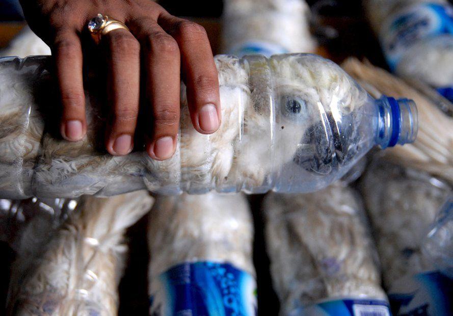 Cacatuas seriam contrabandeadas na Indonésia / Reuters/Antara