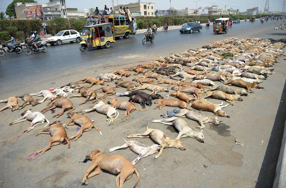 Karachi tem campanha de eliminar cachorros abandonados / RIZWAN TABASSUM / AFP