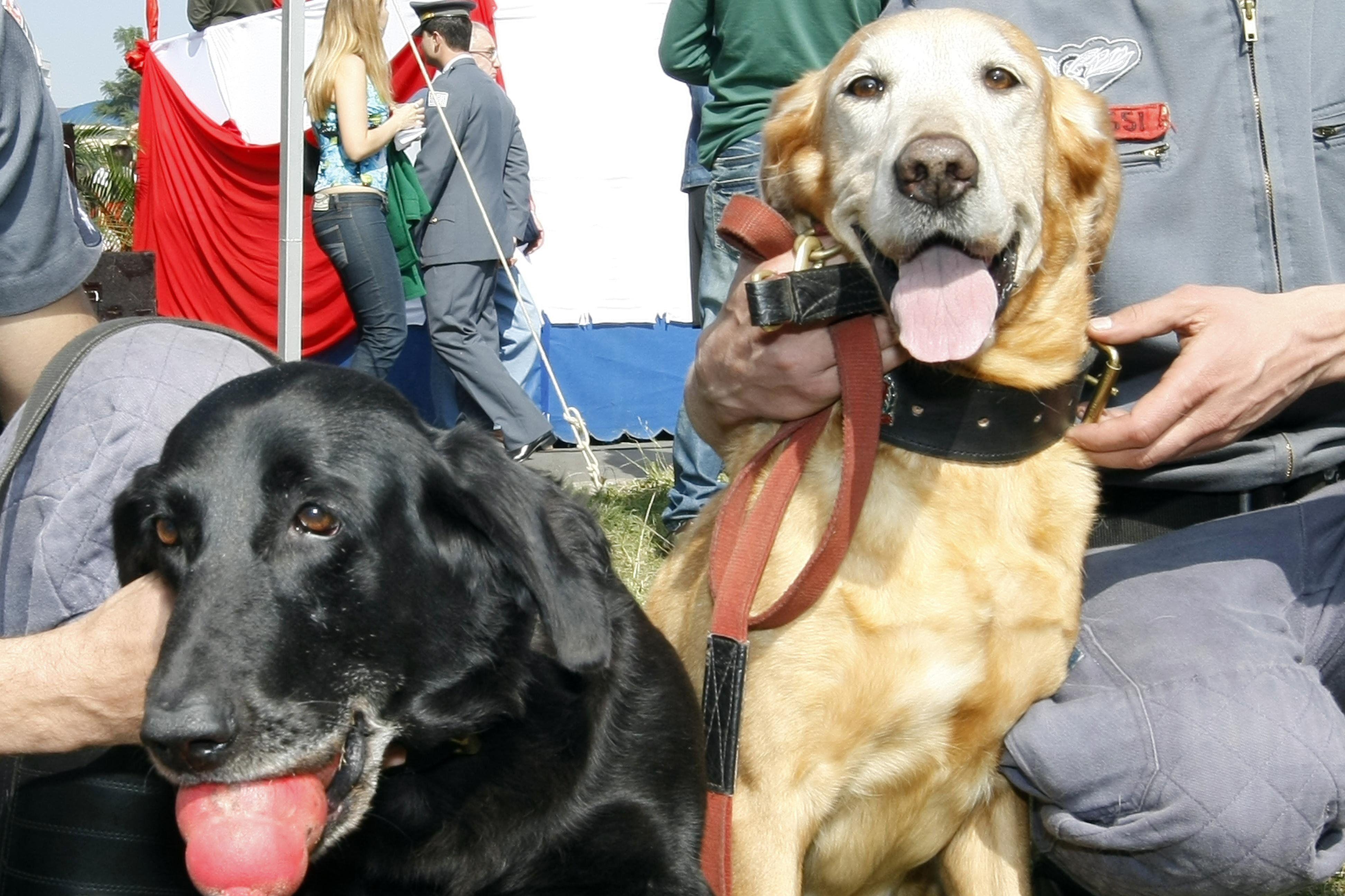 Cães usados em resgate pelo Corpo de Bombeiros / Mastrangelo Reino/Folhapress