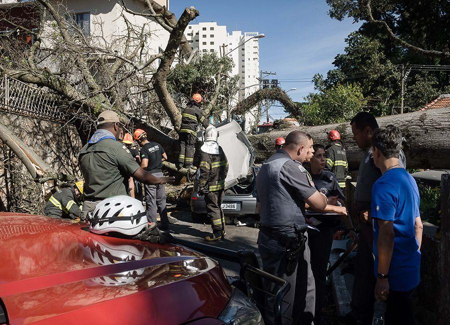 Árvore cai sobre veículo no Mandaqui / Humberto Lisboa/Futura Press/Folhapress