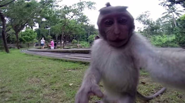 Macaco se filma com câmera de turista / Reprodução/YouTube