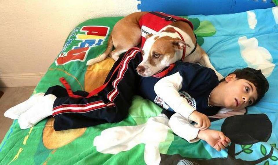 Anthony Merchante precisa de seu cão para auxiliá-lo em emergências