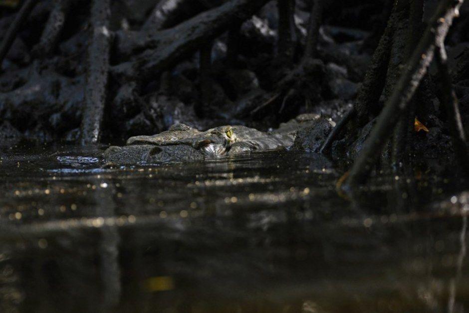 Homem ignorou aviso sobre presença de crocodilos no lago / Marvin Recinos / AFP