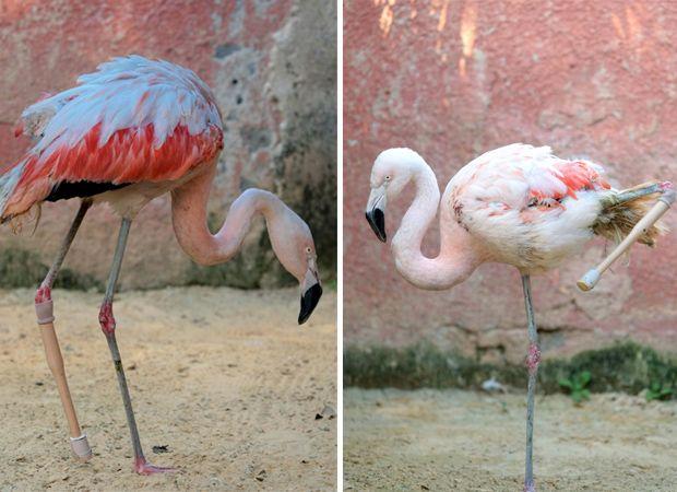 Flamingo teste sua prótese