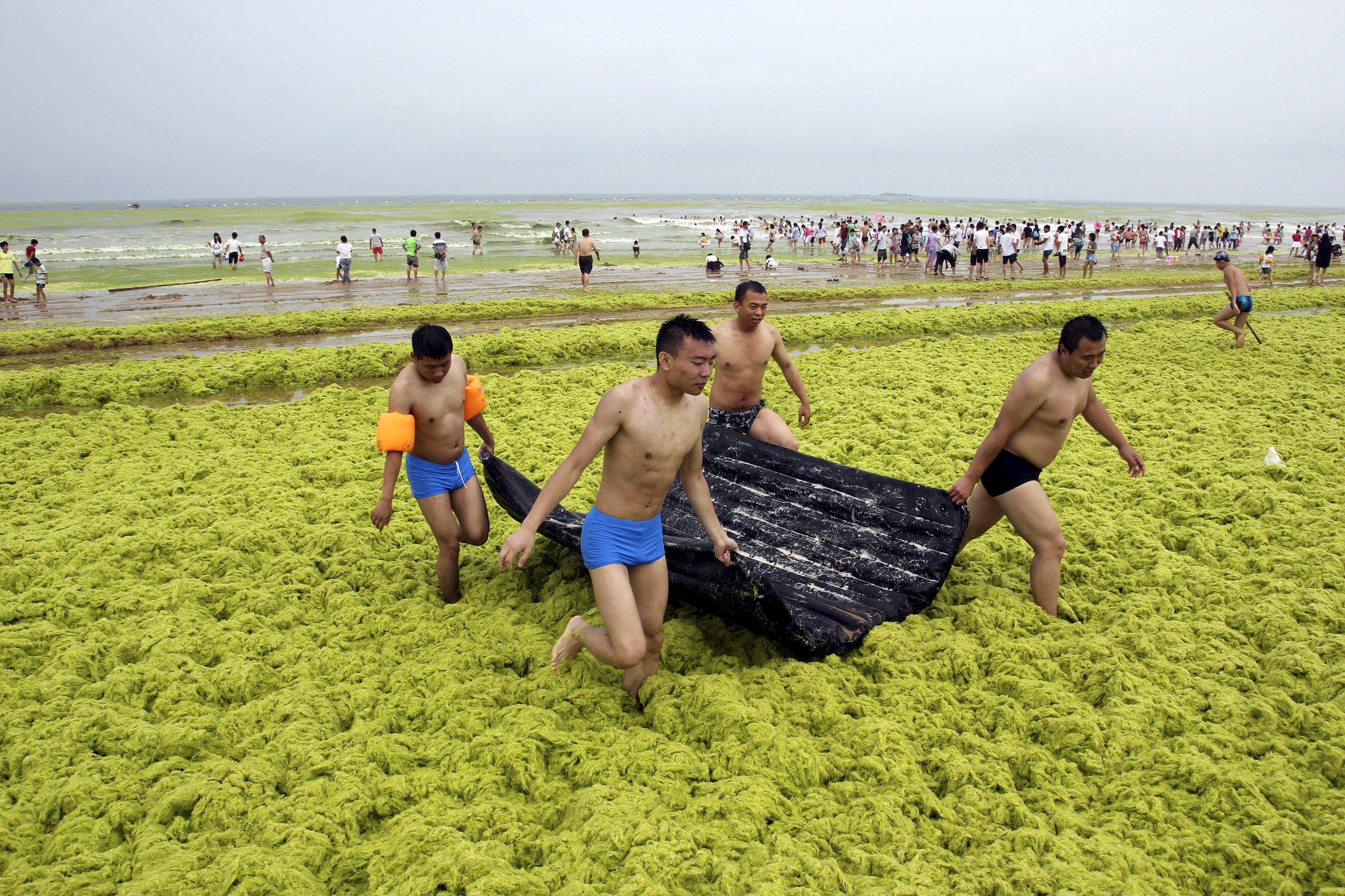 Jovens se embrenham em algas para chegar até o mar / Reuters
