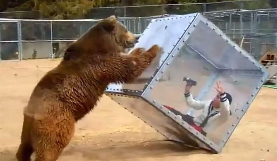 Urso ataca caixa com mulher em programa de TV bizarro