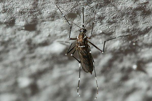 Vacina contra dengue é eficaz em 80% dos pacientes