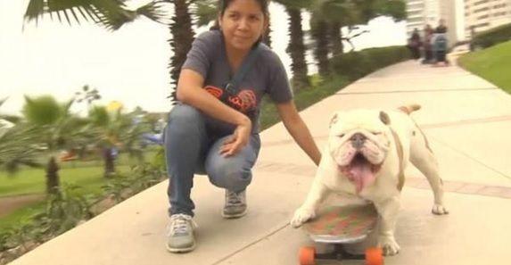 Em skate, cão passa por entre pernas de 30 pessoas e quebra recorde