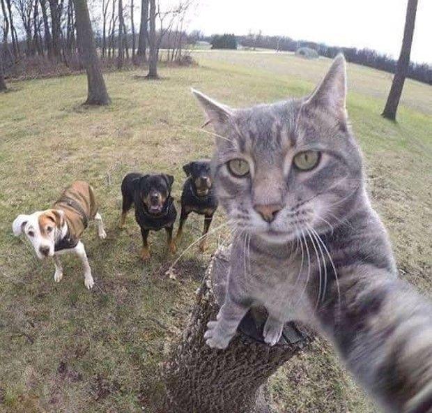Gato faz selfie e conquista a internet