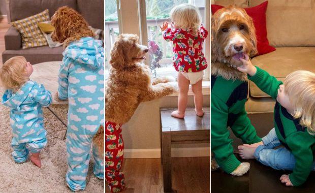 Casal veste o cão igual ao neto e conquista a internet