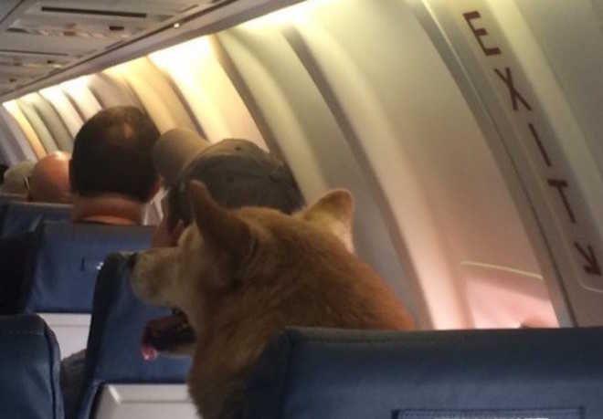 Cachorro no avião conquista o Twitter