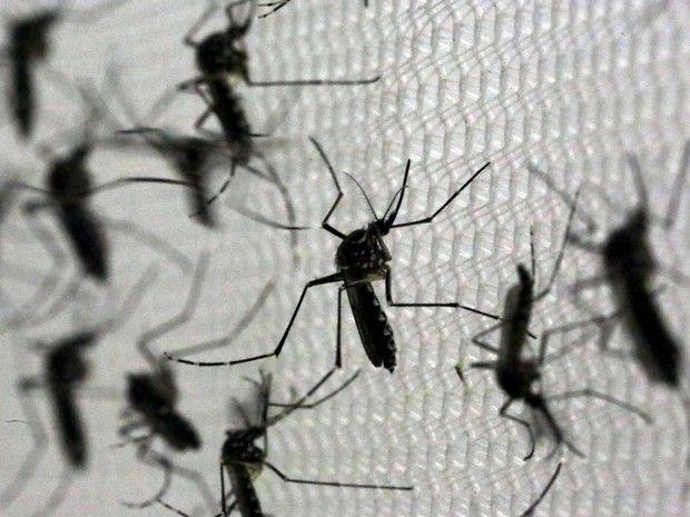 Agência da ONU de energia atômica discute combate ao Aedes
