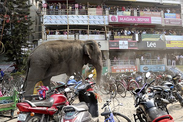 Elefante selvagem causa pânico na Índia