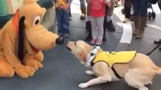 Cão-guia fica se emociona ao conhecer Pluto