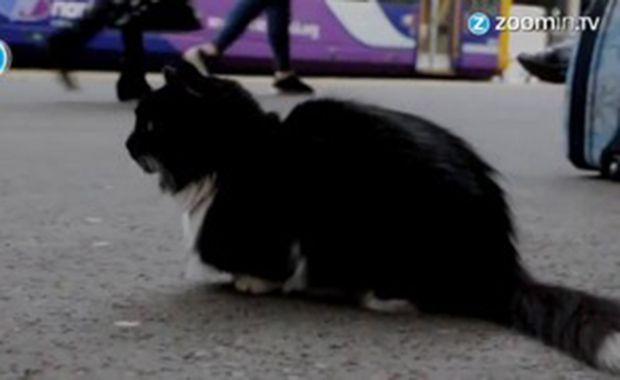 Conheça a gatinha que cuida de uma estação de trem