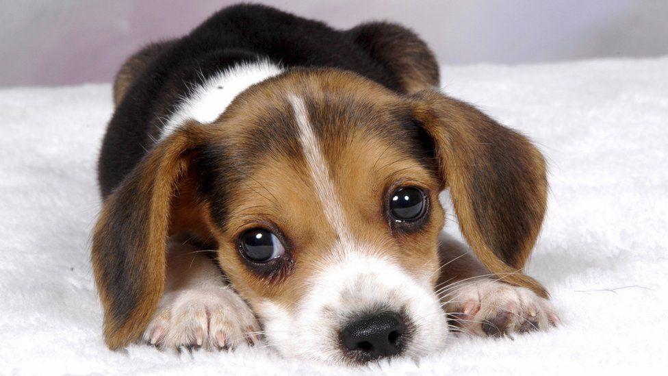 Para adotar cães e gatos, basta levar o RG, CPF e comprovante de residência / Thinkstock