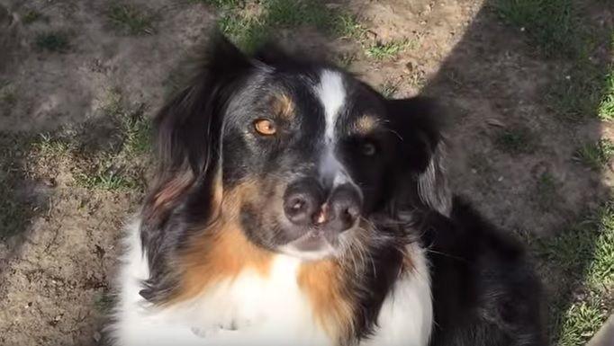 Homem adota cachorro com dois focinhos
