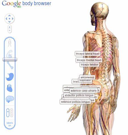 Reprodução do aplicativo Body Browser