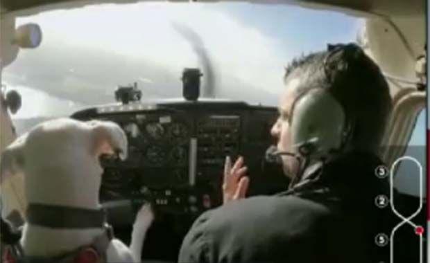 Cachorro pilota avião sozinho e ao vivo