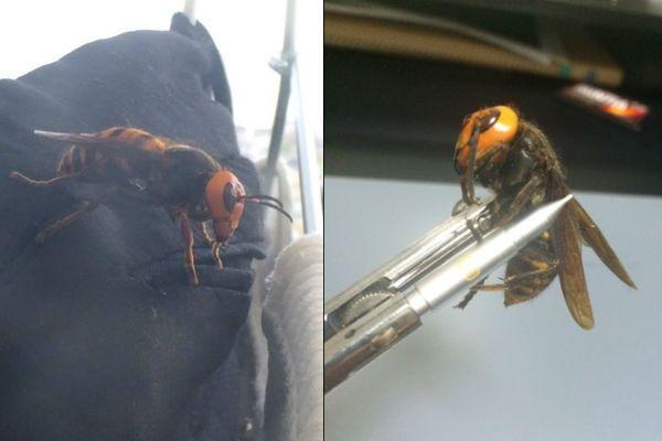 A vespa gigante nas roupas e depois, capturada