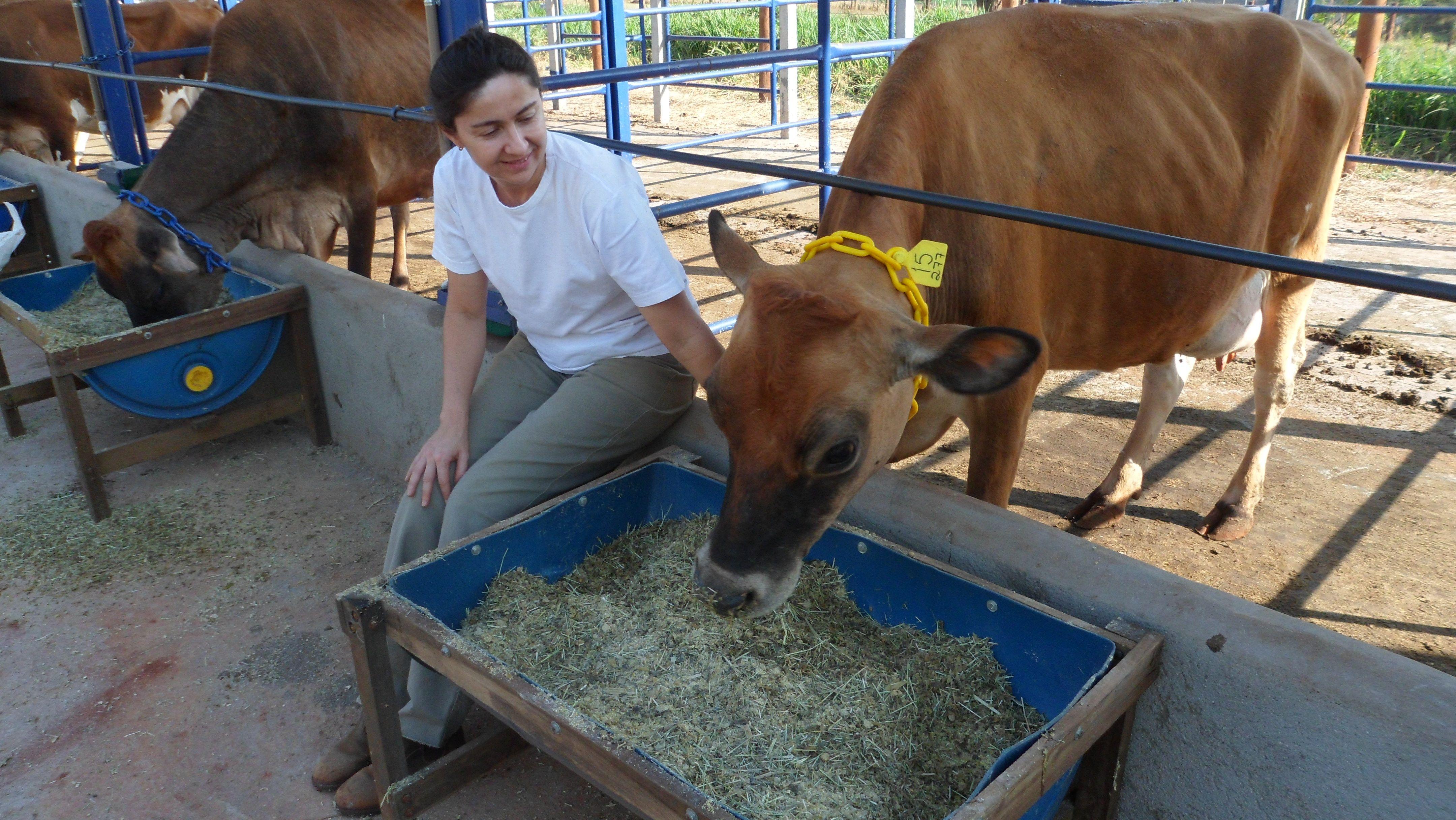Um dos animais usados para pesquisa de leite biofortificado em Ribeirão Preto / Divulgação