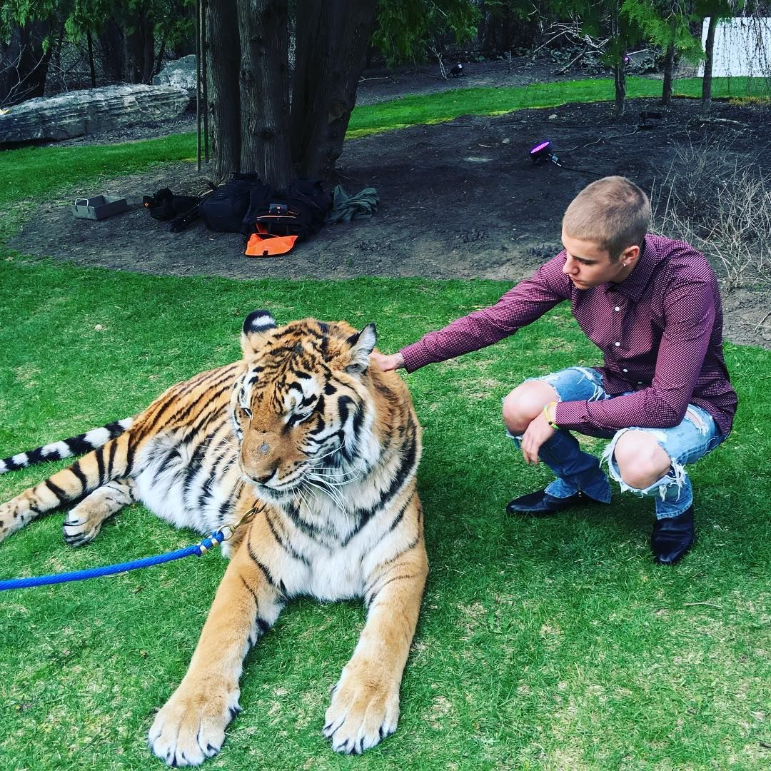 Justin Bieber causa polêmica com ONG ao posar com tigre