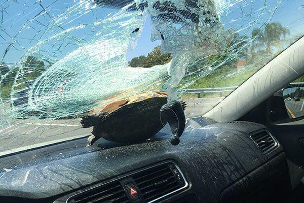 Americana tem para-brisa atingido por 'tartaruga voadora'