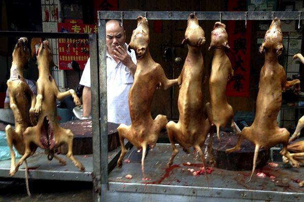 Sob protestos, festival de carne de cachorro começa na China