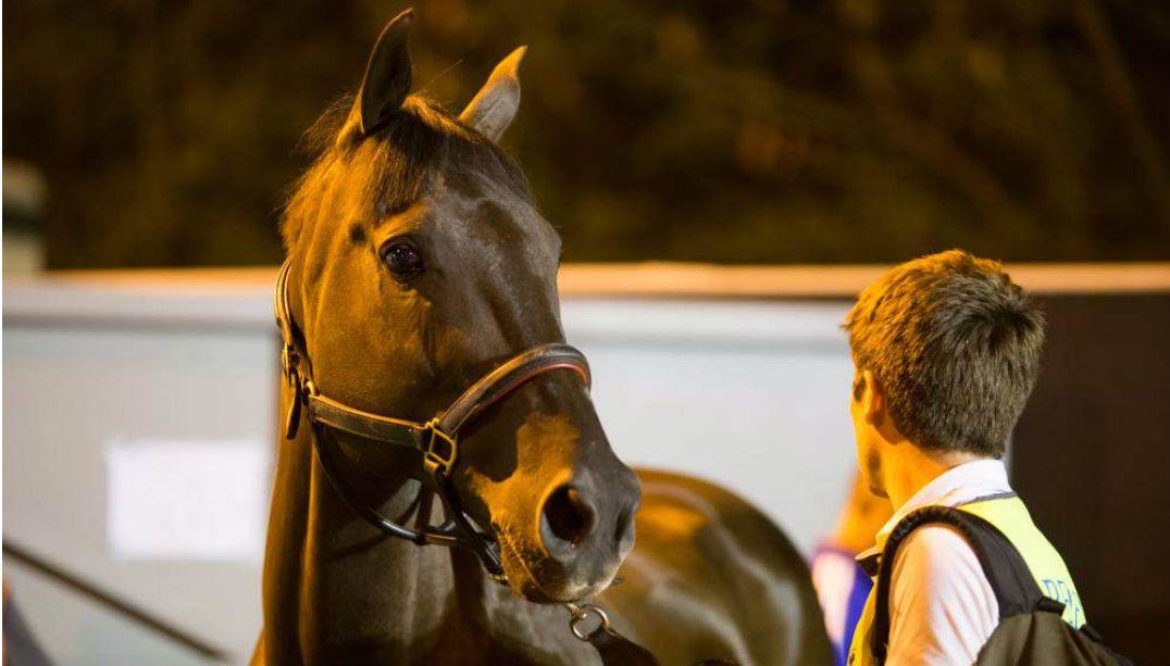 Primeiros cavalos olímpicos desembarcam no Rio de Janeiro