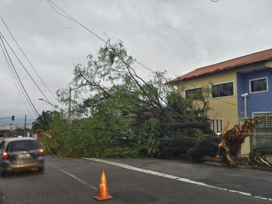 Após a chuva que atingiu a capital, os bombeiros receberam chamados porque 154 árvores caíram / Willian Kury/Rádio Bandeirantes