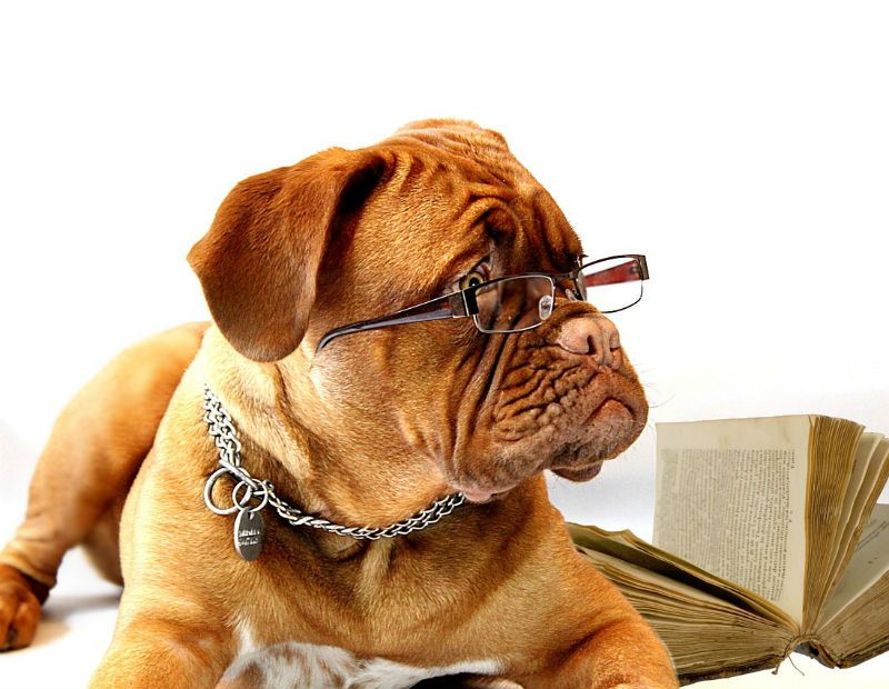Uso de óculos por pets é discutido em Roma