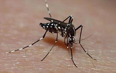 Instituto Butantan pesquisa remédio contra Zika vírus