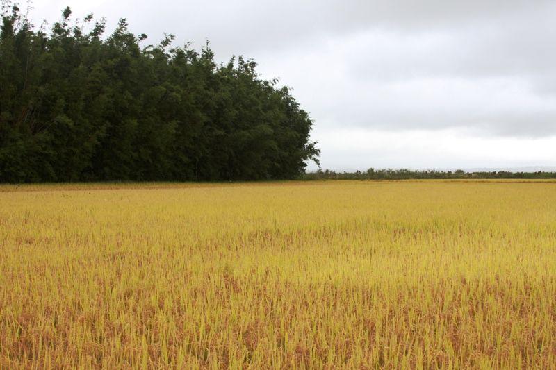 Produção as safra nacional de grãos fecha ciclo com volume previsto de mais de 250 milhões de toneladas