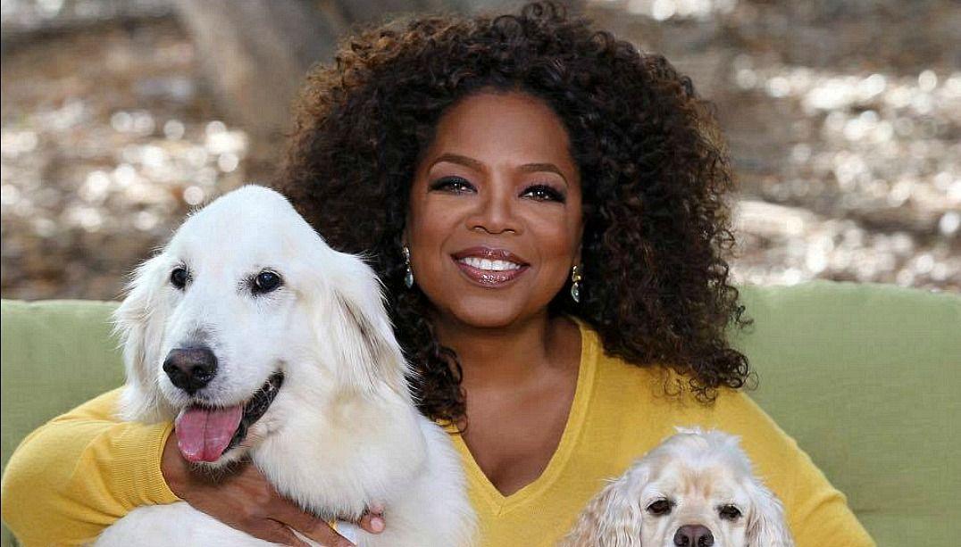 Oprah Winfrey considera se candidatar à presidência dos EUA